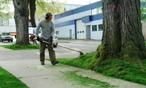 Natural Wonders Trees: Lawn Mowing