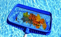 Quintana Pools: Pool Cleaning