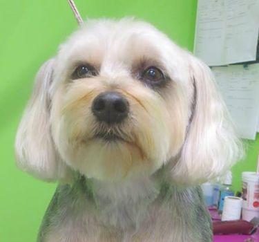 Dippity do dog nashville tn dog grooming book online solutioingenieria Choice Image