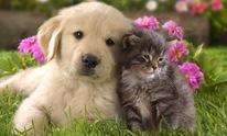 Superstar Pet Sitting And Dog Walking: Pet Sitting