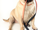 Superstar Pet Sitting And Dog Walking: Dog Walking