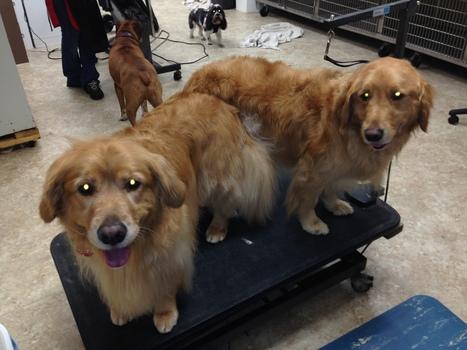 dog daycare louisville
