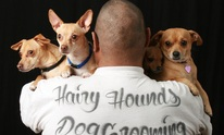 Hairy Hounds Dog Grooming: Dog Grooming