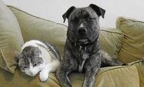 Boyle's Pet Sitting Service: Dog Walking