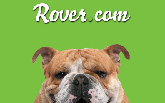Rover-bulldog_11-updated