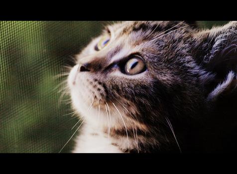 Chatter Cat Inn Mt Juliet Tn Pet Sitting Book Online