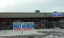 Doggy Daydream: Dog Grooming