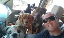 Kevin Dog Walking: Pet Sitting
