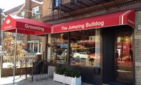 Jumping Bulldog: Cat Grooming