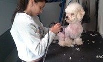 Mobile Pet Care: Dog Grooming