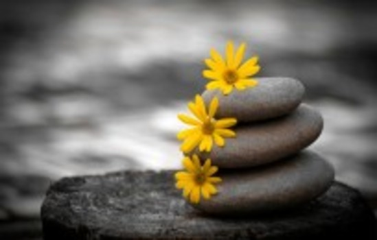 Yellow-flowers-in-pile-of-stones-104104