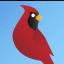 Cardinalsin47