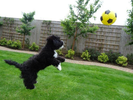 This incredibly talented dog will put your soccer skills to shame
