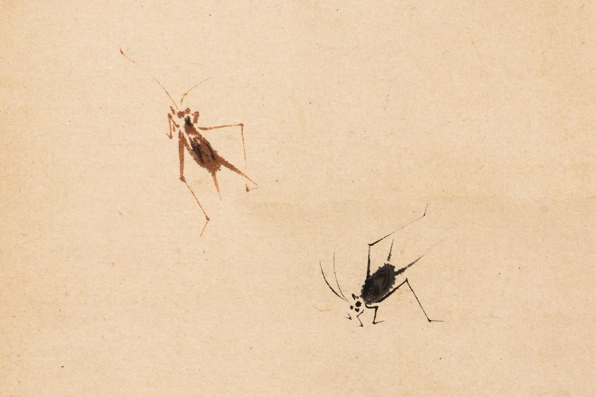 Japanese Antique Scroll of Crickets