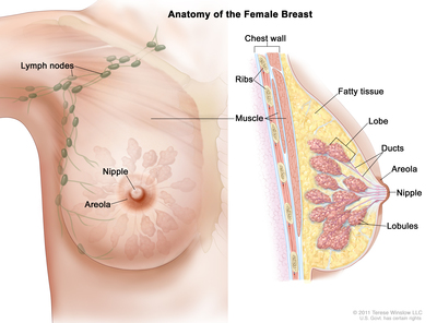breast cancer library   navigating care