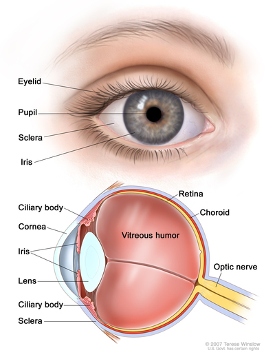 Intraocular Uveal Melanoma Library Navigating Care