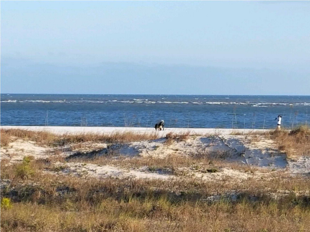 MLS Property 260562 for sale in Cape San Blas