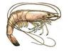 King Shrimp Trading Company Inc,
