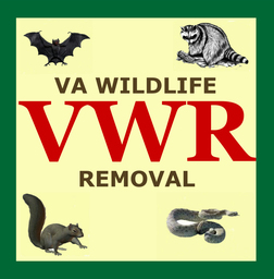 Virginia Wildlife Removal - WorkingPoint