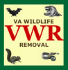 Virginia Wildlife Removal