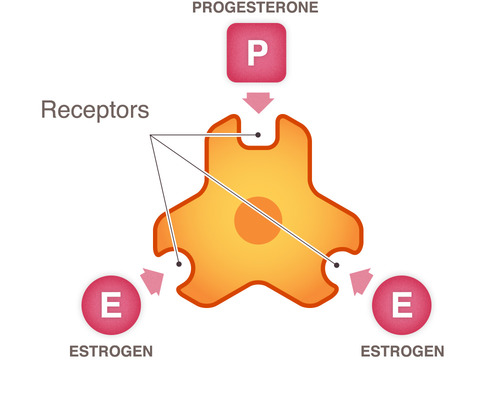 cancer cell receptors
