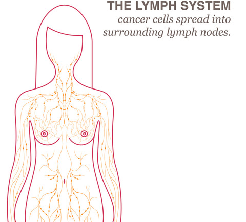 Breast lymph nodes picture