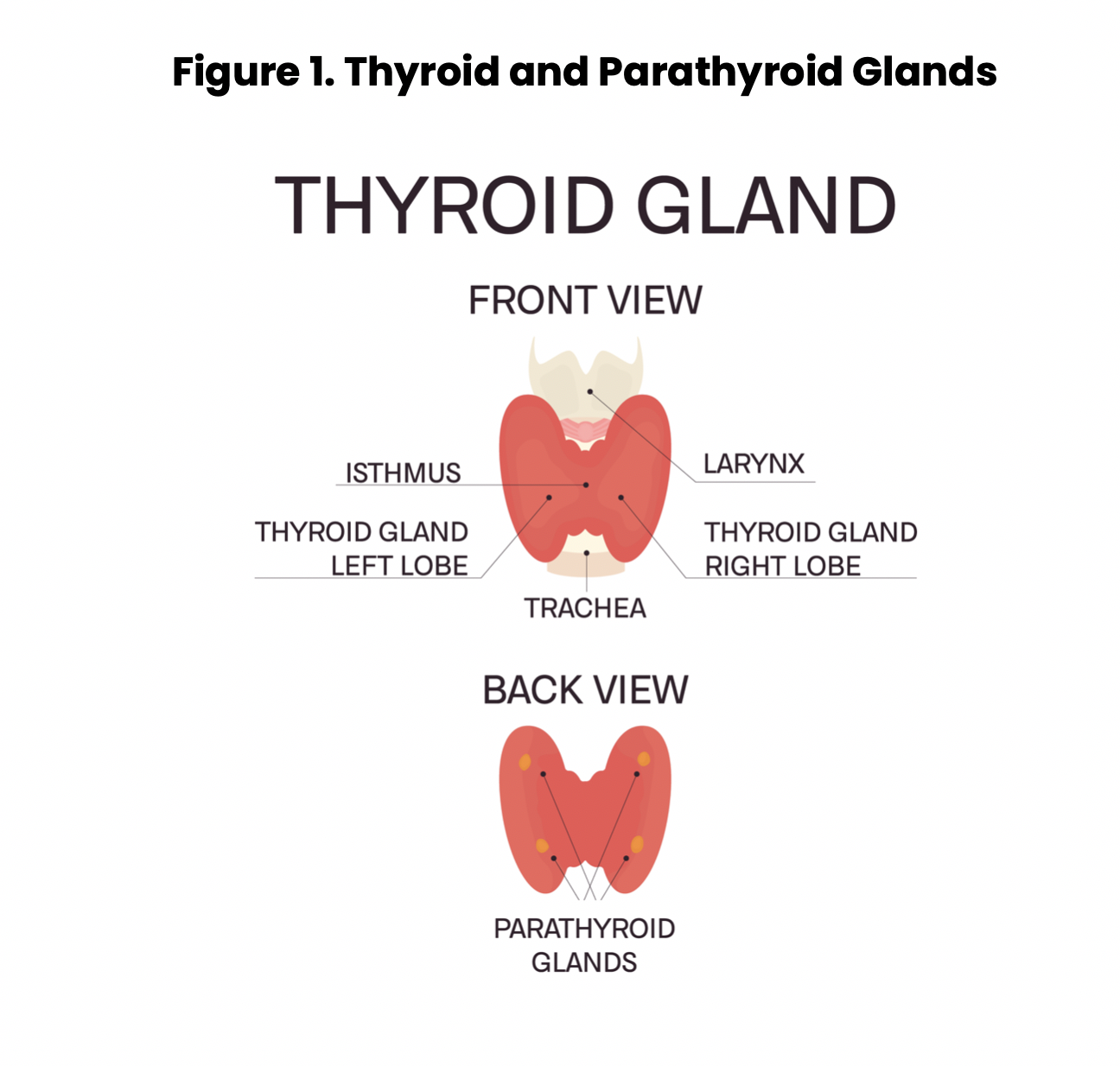 Thyroid Dysfunction Nursing Ce Course Nursingce