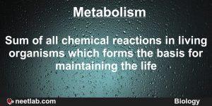 Metabolism in orgamisms
