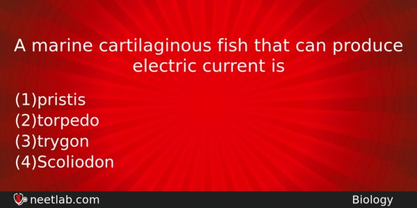A marine cartilaginous fish that can produce electric current is ...