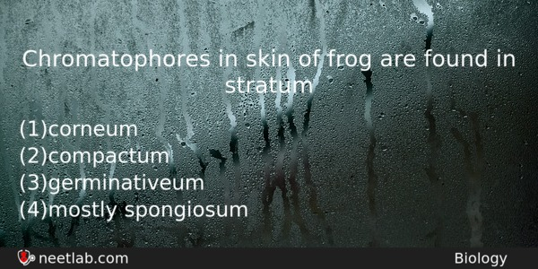 Chromatophores in skin of frog are found in stratum - NEET Lab