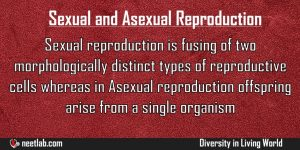 Difference Between Asexual Reproduction And Sexual Reproduction Diversity In Living World Explanation