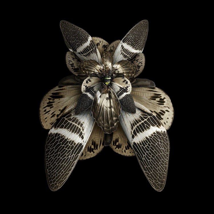 flowers made with insect wings by Seb Jeniak