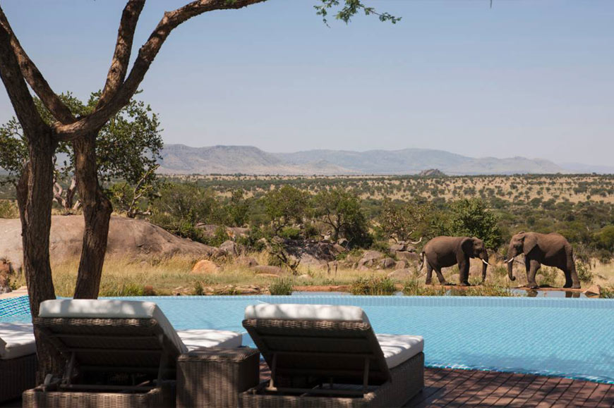 Infinity pool near a watering hole, Four Seasons Hotel, Serengeti, Tanzania