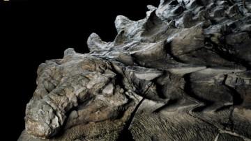 1494815630_nodosaur_fossil