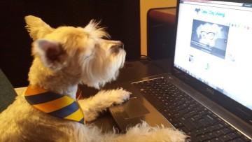 1501026289_work-like-a-dog-day-dog-on-computer