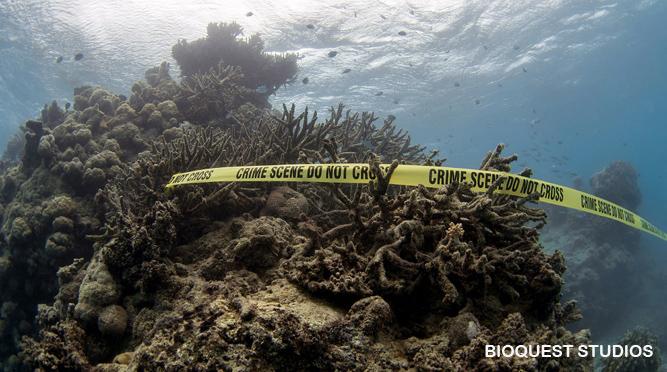 Ameaça aos Recifes de Corais