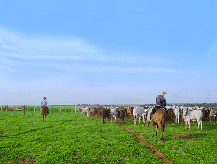 Fazenda Agrochapada