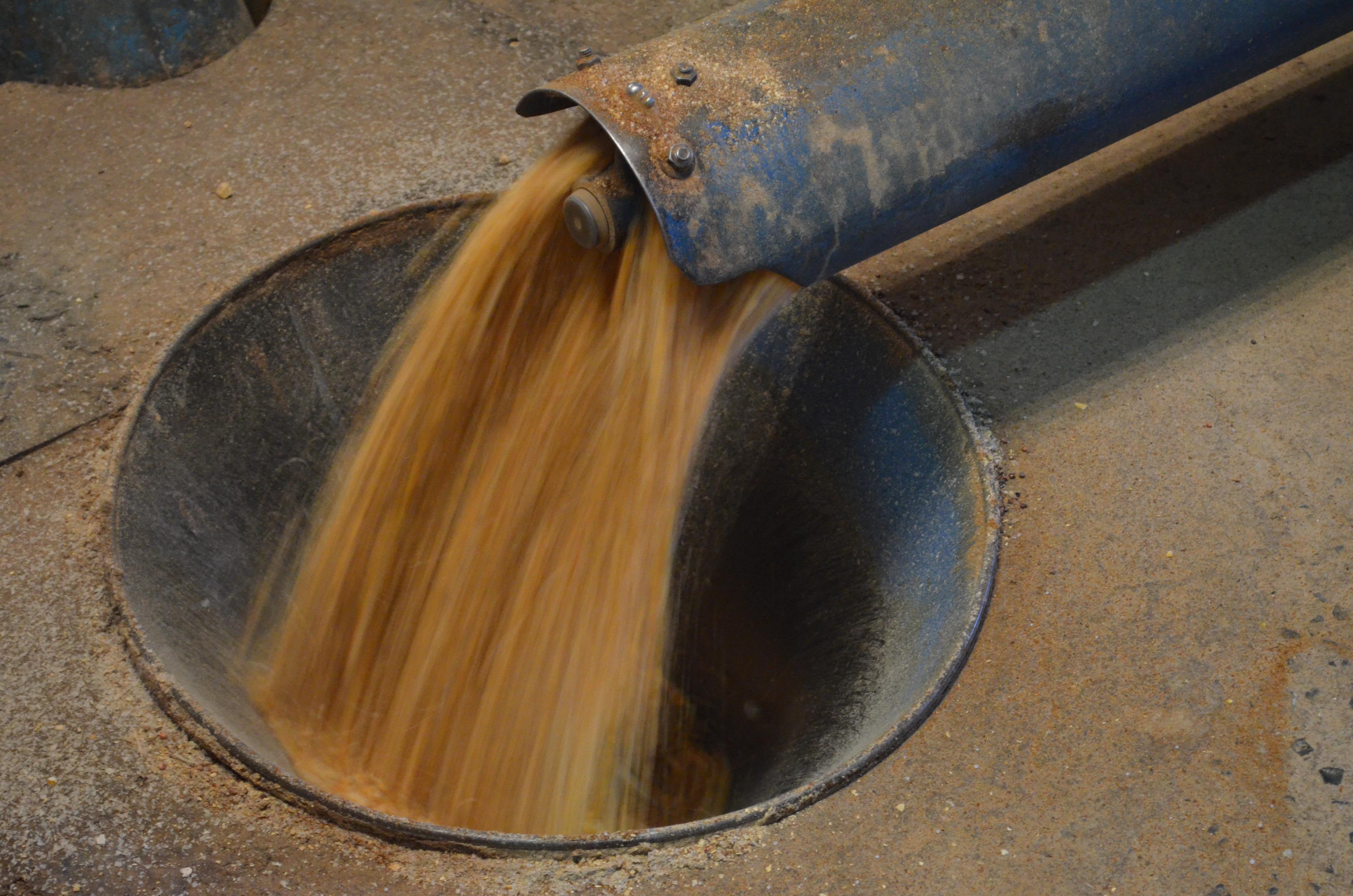 homogeneidade do grão na fábrica de ração