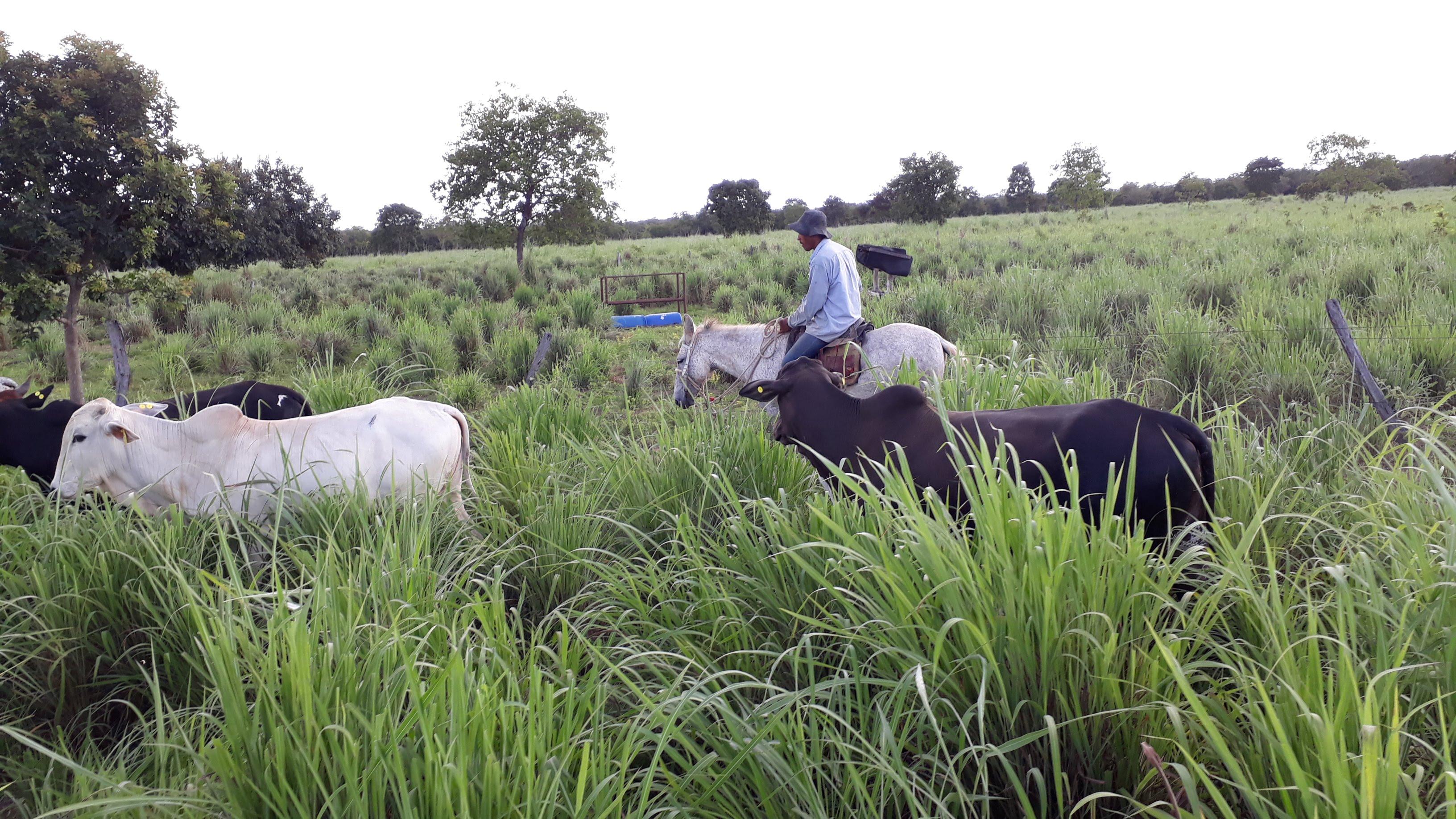 vistoria geral na fazenda