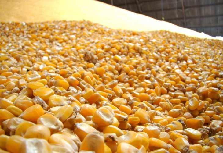 armazenamento de milho na fábrica de ração