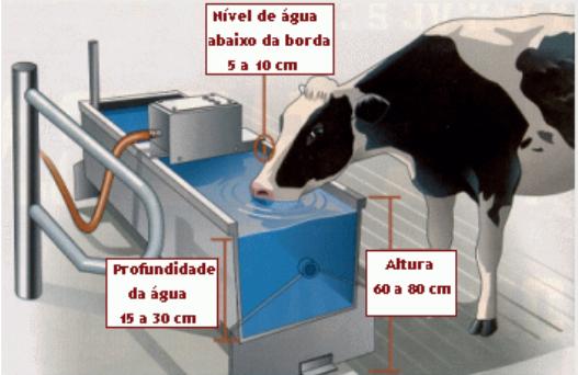 bebedouro para vacas