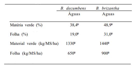 comparação entre capim marandu e decumbens