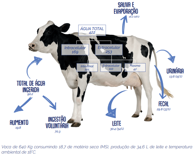 perda e consumo de agua pelas vacas leiteiras
