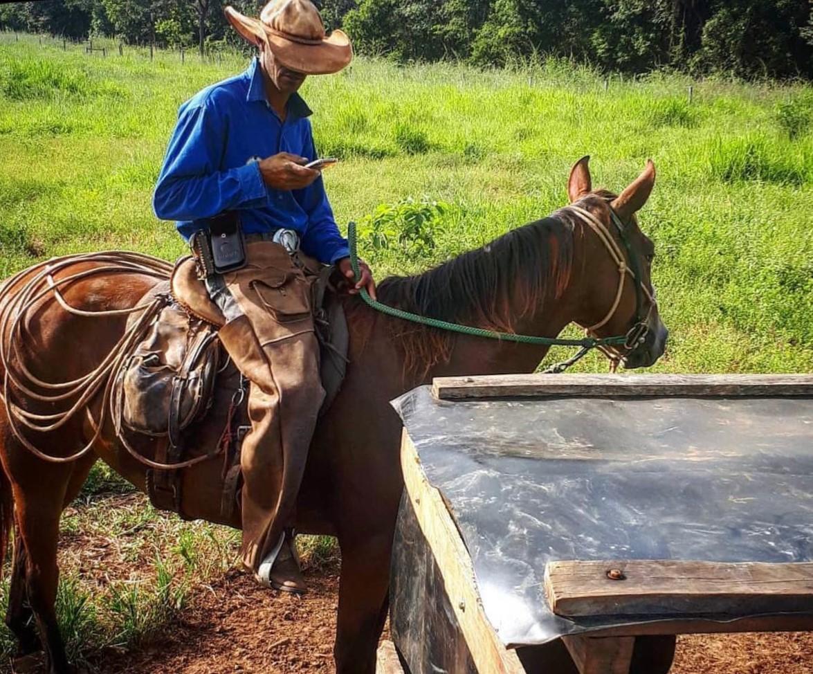 vaqueiro aferindo o cocho na fazenda