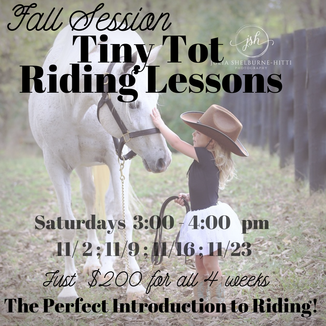 Copy of copy of begginer riding lessons %282%29