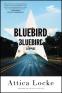 Cover Image: Bluebird, Bluebird