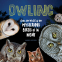Cover Image: Owling