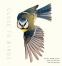 Cover Image: Close to Birds