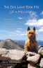 Cover Image: The Dog Who Took Me Up a Mountain