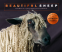 Cover Image: Beautiful Sheep